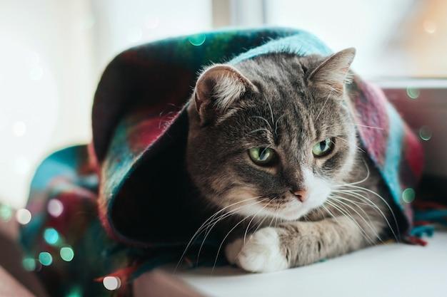 Eine graue katze mit grünen augen sitzt auf einer fensterbank, die in einen warmen wollschal gewickelt ist.