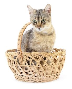 Eine graue katze sitzt in einem korb.