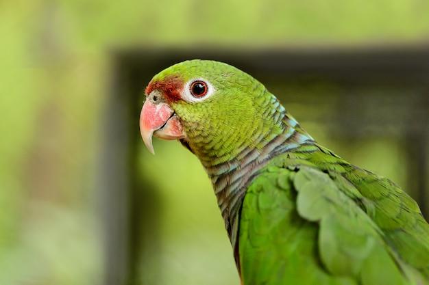 Eine große grüne papageiennahaufnahme
