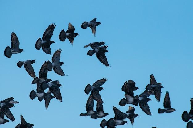 Eine große herde tauben fliegt über den blauen himmel