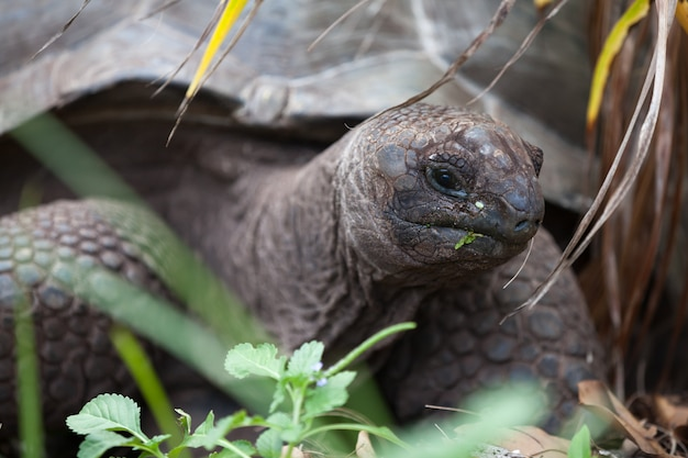 Eine große schildkröte zwischen den gräsern