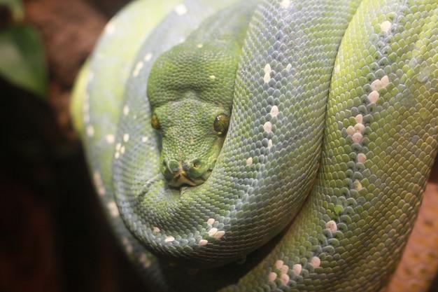 Eine grüne schlange