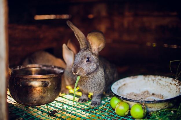 Eine gruppe junger kaninchen im stall
