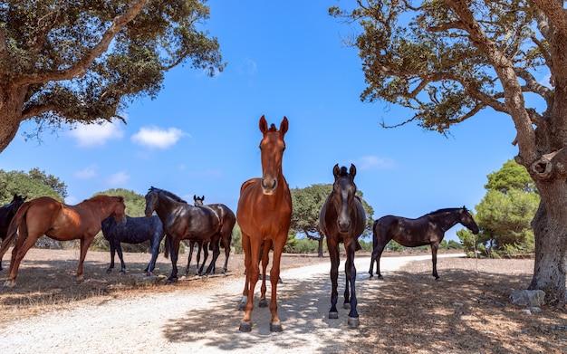 Eine gruppe schöner pferde entspannt sich im schatten der bäume