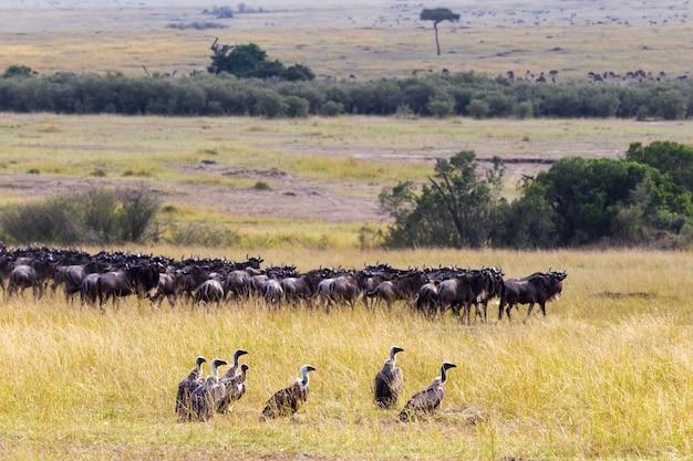 Eine gruppe von geiern im hintergrund einer gnuherde kenia afrika
