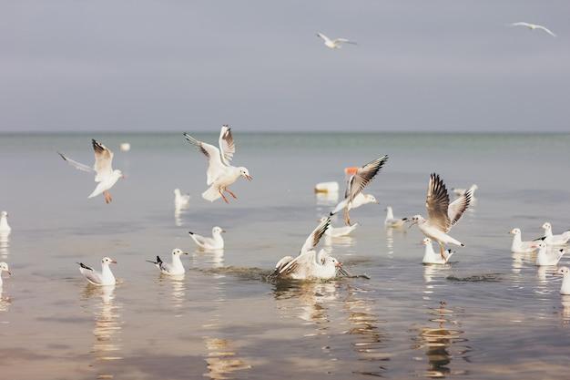 Eine gruppe von möwen, die über den ozean fliegen