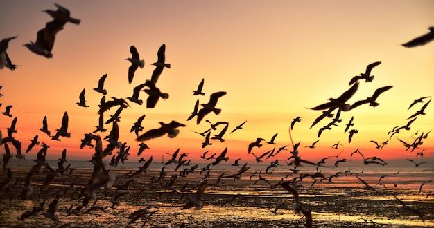 Eine gruppe von möwen, die vor der dämmerung in den bunten himmel des meeres fliegen
