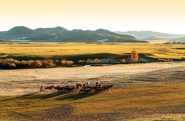 Eine gruppe von pferden laufen lassen