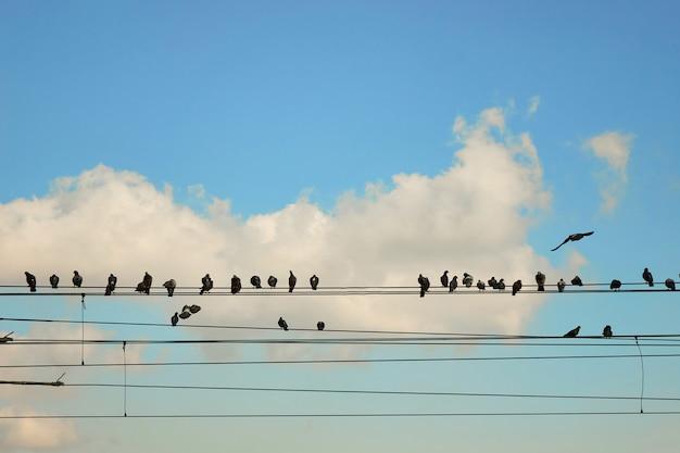Eine gruppe von tauben, die auf drähten gegen einen blauen himmel sitzen