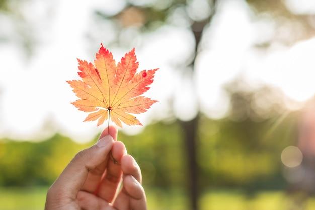 Eine hand mit einem ahornblatt auf unscharfem hintergrund von grünen bäumen in einem sonnigen garten