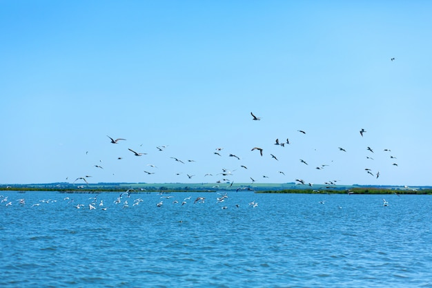 Eine herde möwen jagt fische im fluss