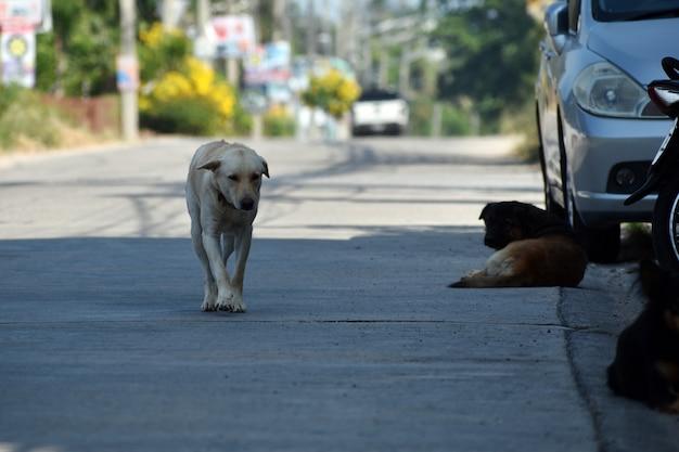 Eine herde streunender hunde. gefährliche straßenhunde.