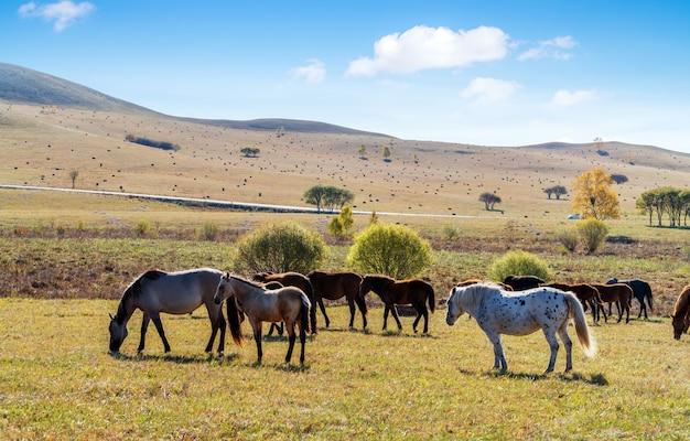 Eine herde von pferden auf der herbstwiese