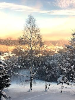 Eine hohe birke in der verschneiten landschaft auf den italienischen alpen