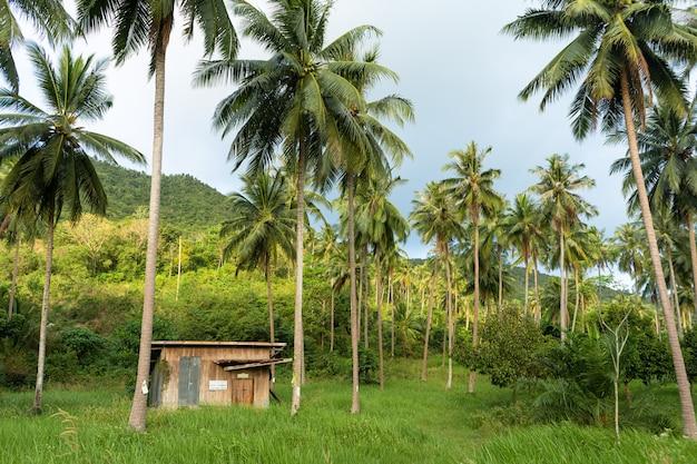 Eine hütte zwischen palmen im dschungel.