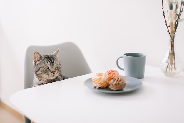 Eine hungrige hauskatze sitzt an einem tisch mit frühstück