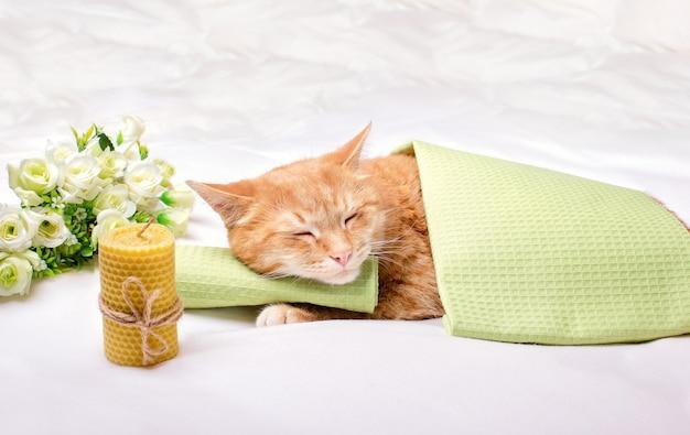 Eine ingwer hauskatze schläft mit dem kopf auf einem grünen handtuch