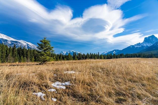 Eine isolierte kiefer auf ungeschmolzenem schneewiesen mit schöner wolkenlandschaft im spätherbst