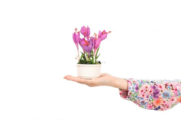 Eine junge attraktive dame der vorderansicht in der bunten blume entwarf hemd, das lila blumenpflanze auf dem weiß hält