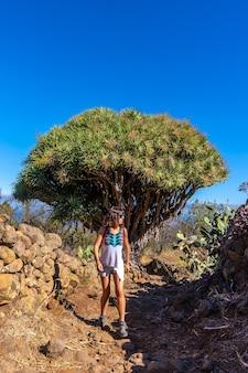 Eine junge frau in einem riesigen drachenbaum auf der spur von las tricias. garafia stadt im norden der insel la palma, kanarische inseln