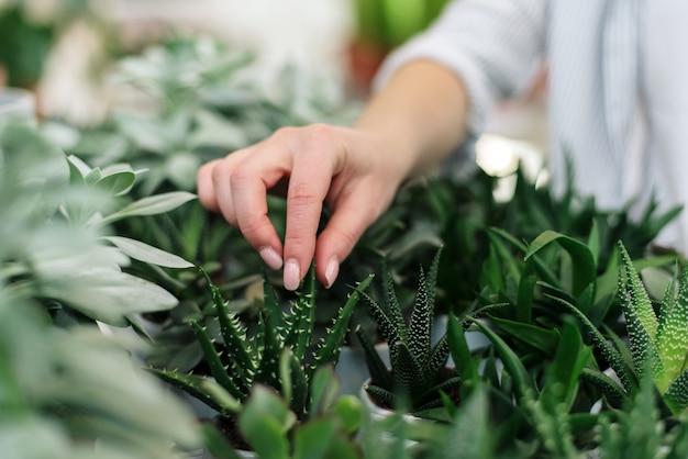 Eine junge frau wählt sukkulenten für ihr zuhause. heimpflanzen kaufen.
