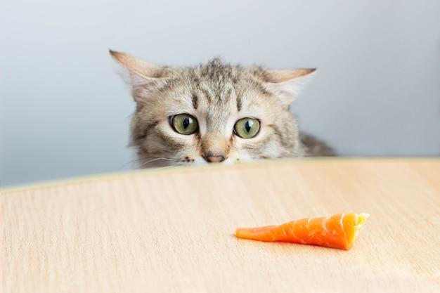 Eine junge hungrige katze beobachtet ein stück roten fisches, das sich hinter einem tisch versteckt. schul-und berufsbildung. fütterung vom tisch