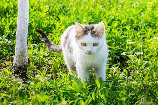 Eine junge weiße katze geht durch das grüne gras im garten