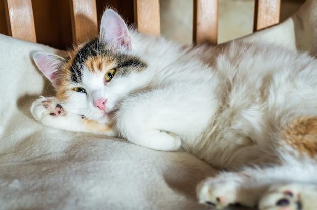 Eine katze auf einem holzstuhl
