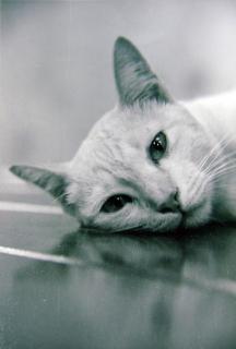 Eine katze (b & w)