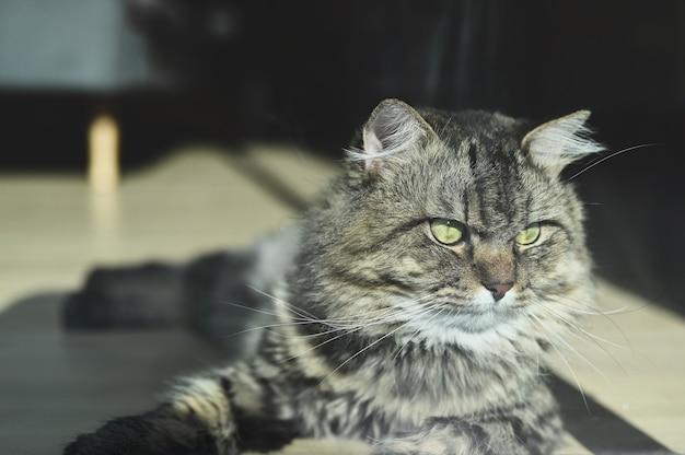 Eine katze, die am morgen auf holzboden im wohnzimmer liegt.