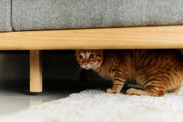 Eine katze, die sich unter einer couch versteckt