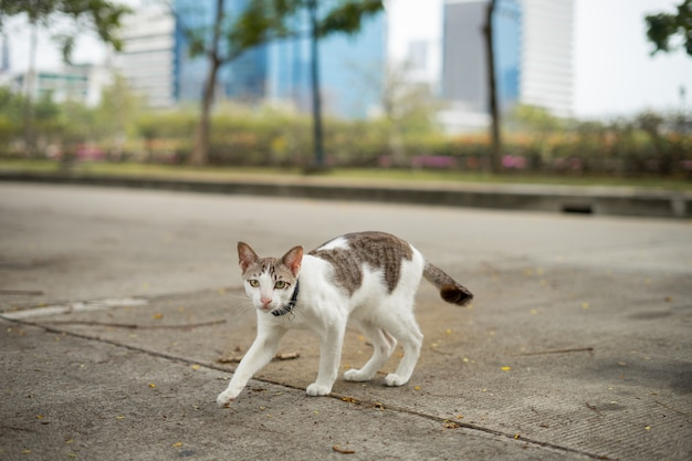 Eine katze geht in den garten. er ist so süß. er sieht aus wie ein kleiner tiger. es ist ein beliebtes haustier.