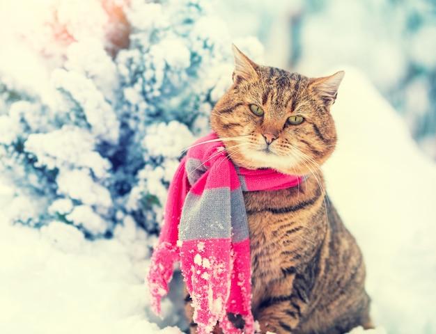 Eine katze in einem strickschal sieht im schnee neben dem weihnachtsbaum