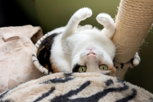 Eine katze lag in einem loch in einem kratzbaum.
