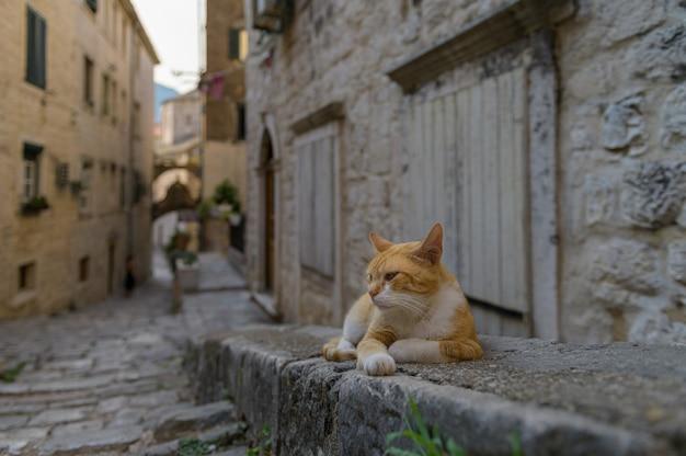 Eine katze sitzt auf dem bürgersteig in der altstadt von kotor montenegro