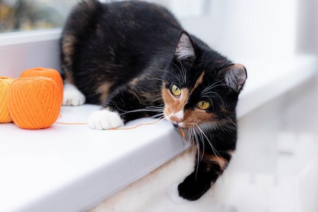 Eine katze spielt mit einem fadenball haustierspiele fäden zum stricken werbespielzeug für katzen