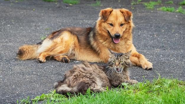 Eine katze und ein hund liegen zusammen auf einem asphalt