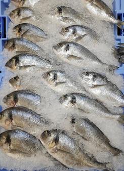 Eine kiste mit eis mit viel dorade fisch zählen im supermarkt frischer fisch dorade fisch