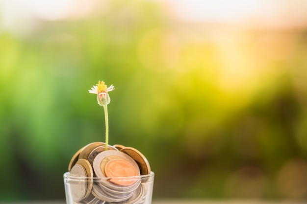 Eine kleine blume, die in einem glas wächst, füllte mit münzen