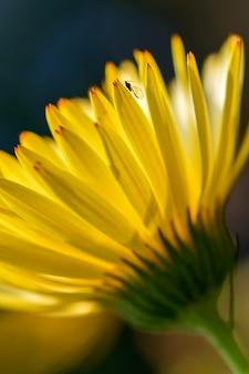 Eine kleine fliege sitzt auf einem blütenblatt einer gelben blume