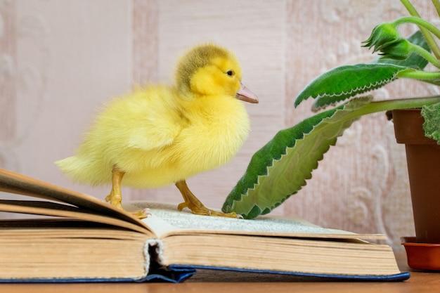 Eine kleine gelbe ente in der nähe des offenen buches. fiktion lesen
