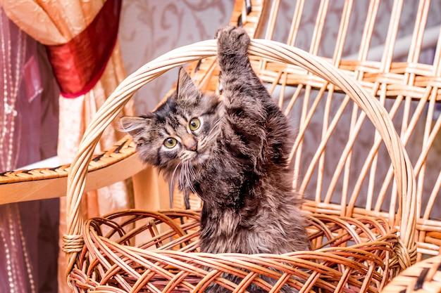 Eine kleine gestreifte katze in einem weidenkorb