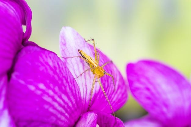 Eine kleine spinne auf der purpurroten orchidee.