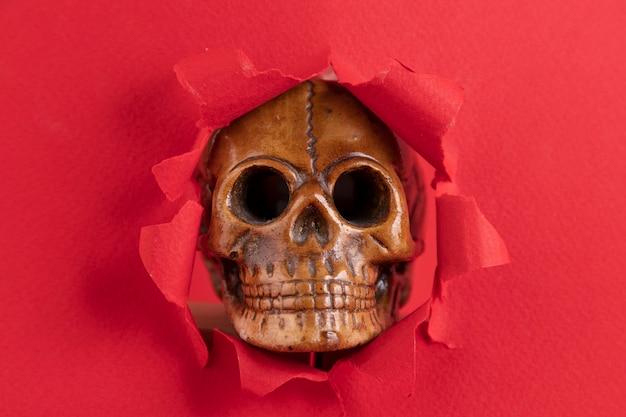 Eine kopie des menschlichen schädels lugt hinter roten papierfetzen hervor. roter hintergrund. platz kopieren.