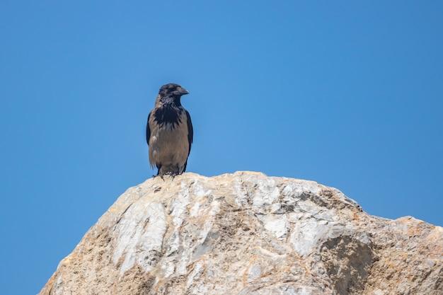Eine krähe steht auf einem felsen vor einem blauen himmel.