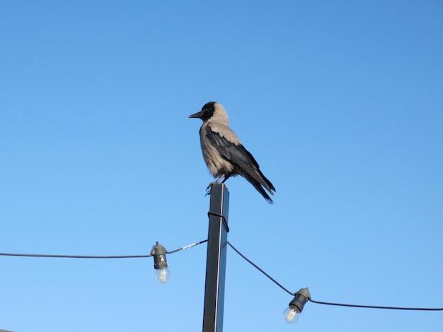 Eine krähe und ein blauer himmel
