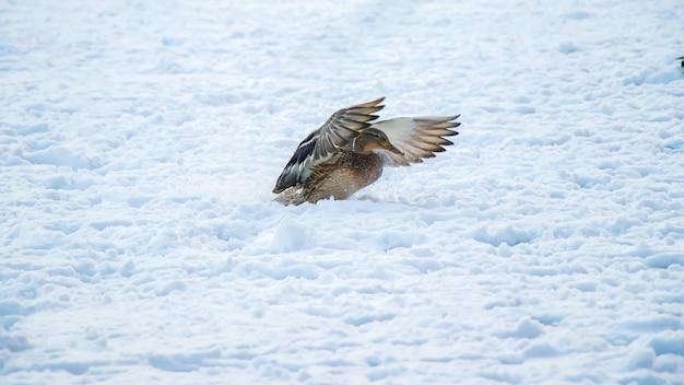 Eine landung im schnee