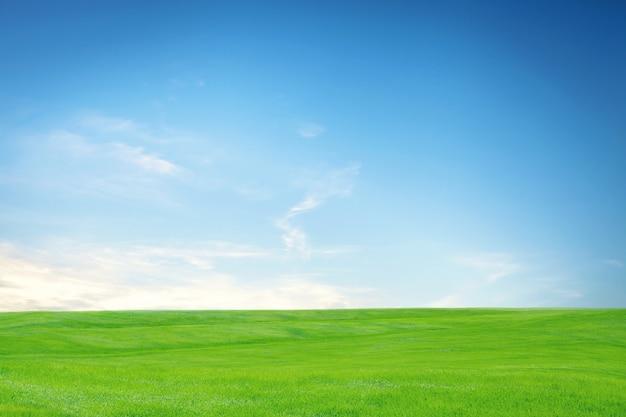 Eine leere grüne wiese mit blauem himmel und weißen wolken
