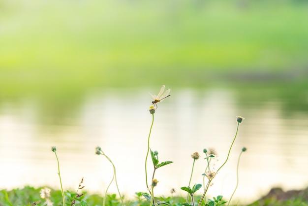 Eine libelle hockte auf blume im naturgarten