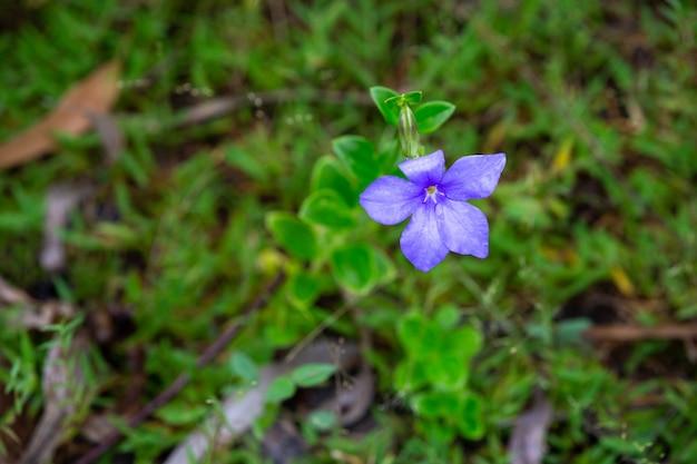 Eine lila einheimische blume der insel madagaskar